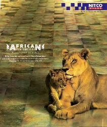 Delhi : Tile Flooring : Nitco African Slate Ceramic Tiles