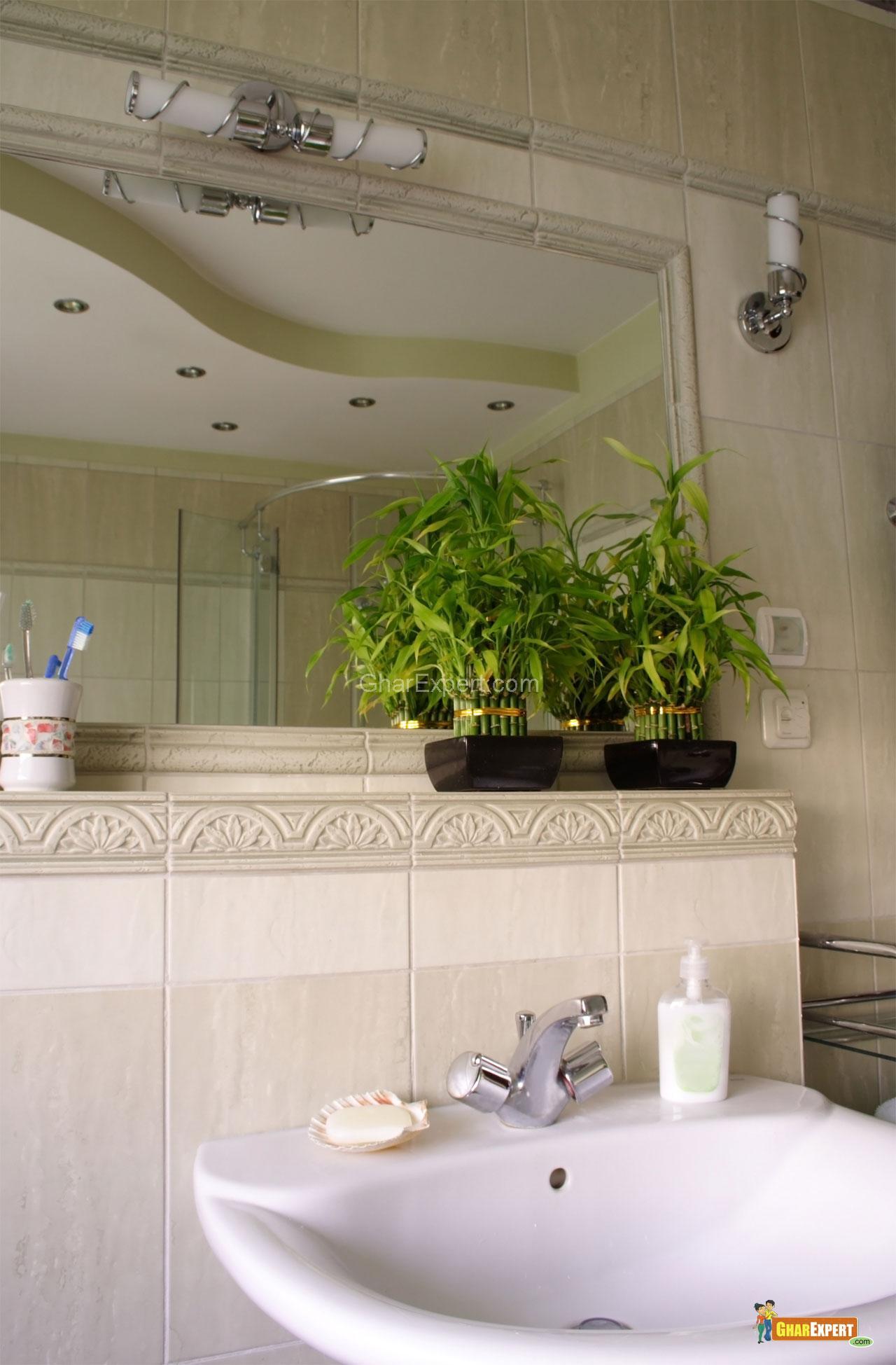 Plants in bathroom - Houseplants for the bathroom ...