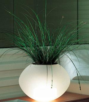 an decorative lighting lamp