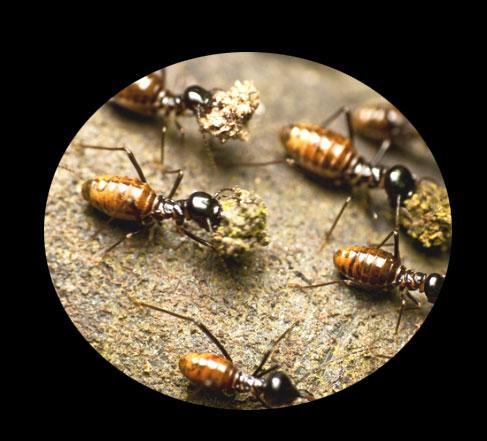 Termite Damage Signs and repai....
