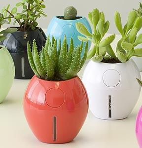 Colorful pots with small cacti and crotons plants
