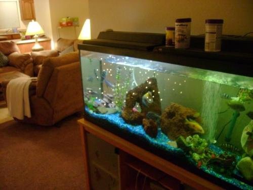 Living Room Aquarium