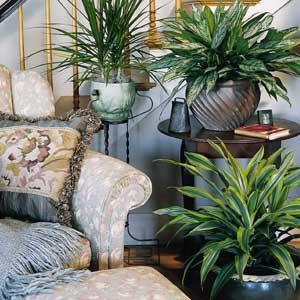 Plants for interior designs