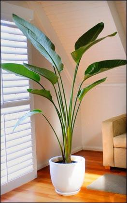 Indoor plants for used narrow corners