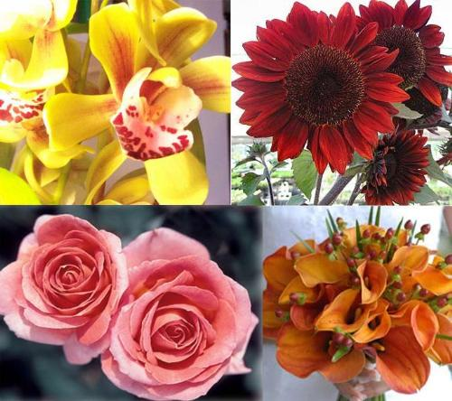 Different Types of Flowers. (Different Types of Flowers)