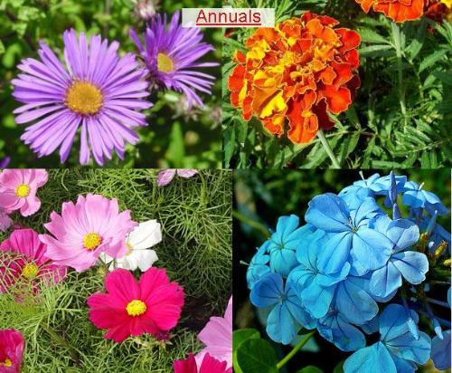 Plants For Your Garden Garden Plants Choose Plants For