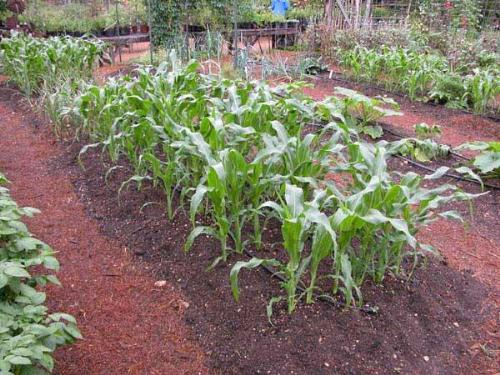 Vegetable Garden Gardening for Beauty and Relaxation
