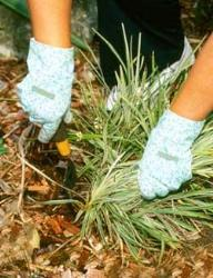 Gloves for gardening